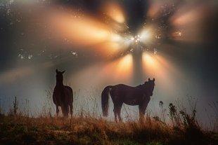 Natural Light Orchestra von Christian Traeger