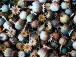 Herbstfarben von GuenterG