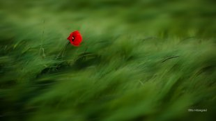 Einsam im Wind von Otto Hitzegrad