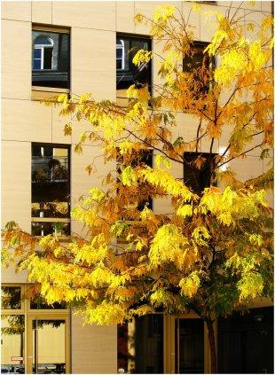 Herbstfarben I von Sönke Luck