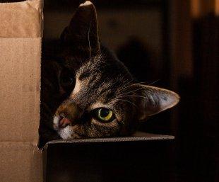 Karton und Katze von caesar_13
