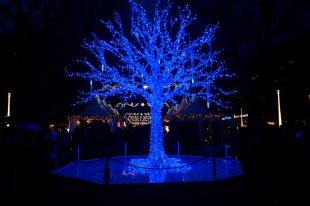 Baum Blau, Blauer Baum... von Andreas niess