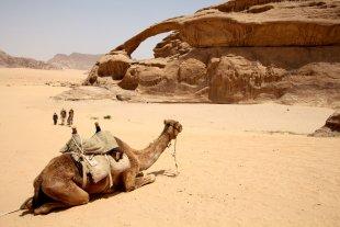 Kamel von Heike Maier