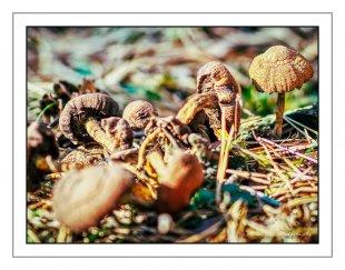 ..im Unterholz.. von MixMax_14
