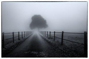 Nebel von Radonart