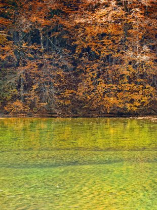 Waldsee im Licht von latediver