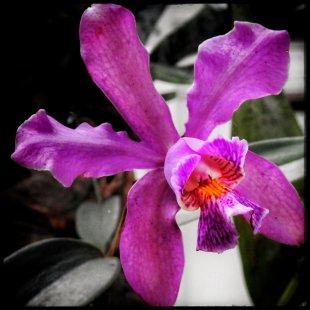 Orchideen von Ladislav Danek