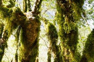 Moos-Wald von Pham Nuwem