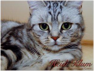 BKH Heidi von Mario68