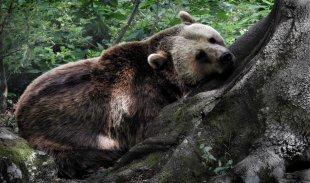 Bärenmammi von oitamooo