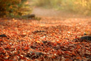 Goldener Oktober von Kaliumhexacyanoferrat