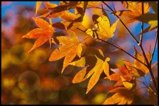 Veritabler Herbst von Rontrus