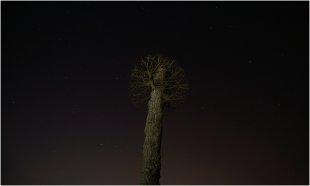 Nachts im Park von pewebe