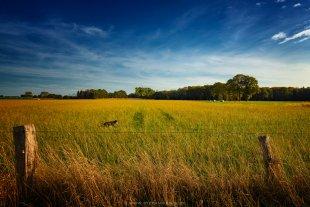 Glücklicher Hund im Gras von Radonart