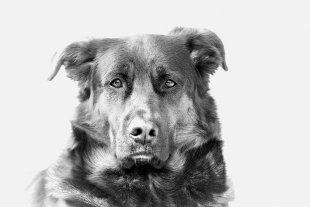 High Key Dog... von Texas Longhorn