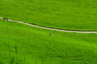 Runaway von H.-Dieter Fischer