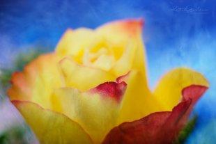 Verliebt in Farbe von Karsten Gieselmann