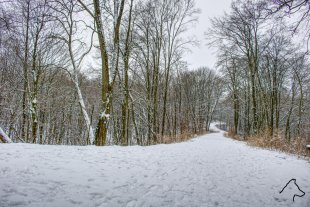 Wald im Schnee von M. Wolf