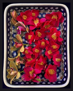 A bowl with floating flowers von FMW51