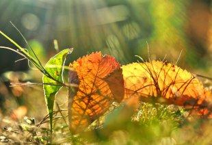 Herbst-Impression von Eberhard  Schmidt-Dranske
