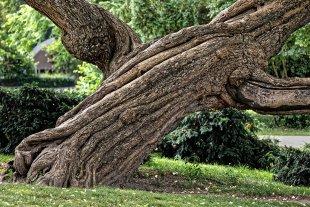 Der weise Baum von Klaus D.