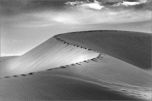 Namib von Manfred Fessel