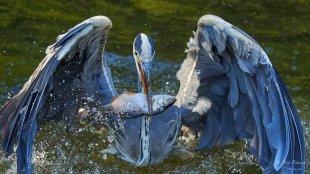 rausgefischt von analoochjehtooch