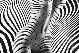 Kurven - Körper - Konturen  (schwarzweiss Aktfotografie-Kunst / zebra nude art) von Kristian Liebrand