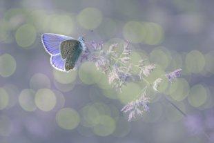 Schmetterling von P.K.1
