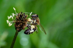 Gibt es da noch Pollen? von Benita W