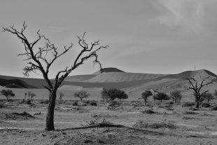 die Wüste lebt von Heike Maier