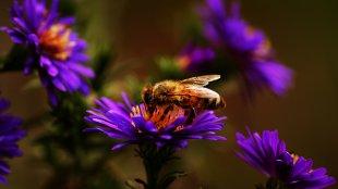 Die frühe Biene fängt ähh Moment mal.. von Joerg94