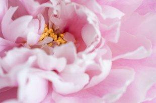 Blumeninsel von flashcube