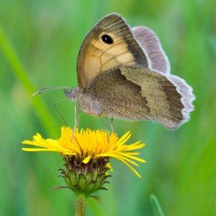Schmetterling von 35mm