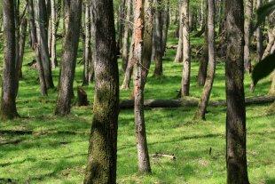 Lichter Wald von Reiner von der Schlei