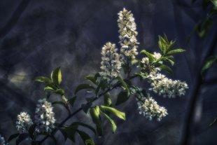 Frühling von Foto-Ceha