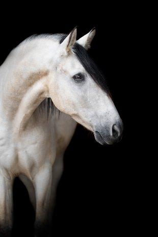 Pferdeportrait von sasamo
