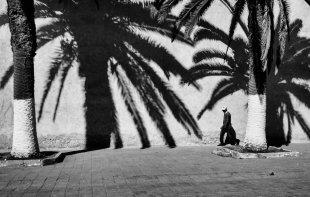 Einsam unter Palmen von Georgie_Pauwels