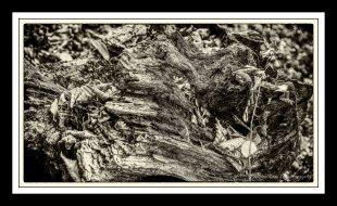 ..deadwood.. von MixMax_14