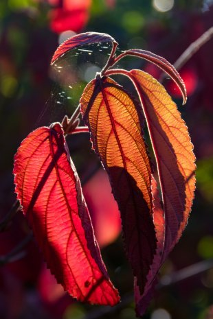 Herbstfarben 3 von Paul S.