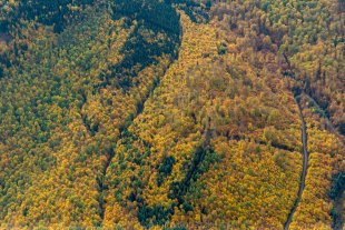 Leuchtender Wald von Joachim Kopatzki