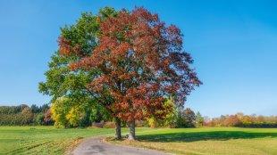 Es wird farbig - der Herbst ist da von iso64