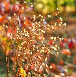 Herbstfarben von Eberhard  Schmidt-Dranske