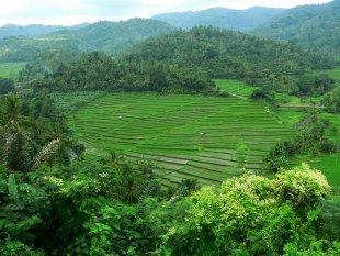 Die wunderbaren Reisterassen auf Bali von RüdigerLinse