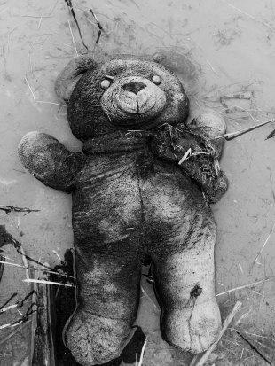 the lost teddy bear von SonyAlpha380