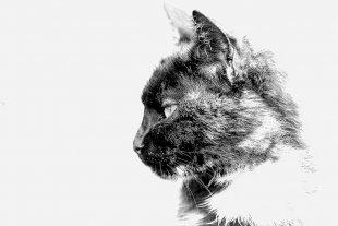 High Key Cat... von Texas Longhorn