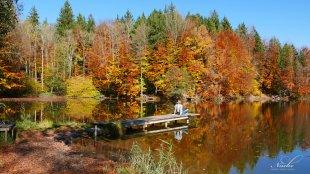 Farbenbad am Waldweiher von snuecke