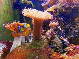 Findet Nemo von Jürgen Guhlke