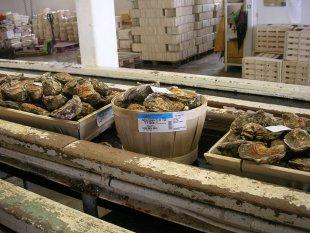"""In der """"Austernfabrik"""" von John Catley"""