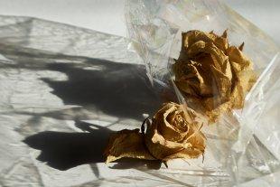 Schattenrosen von Erika Rutert